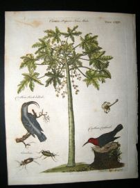 Encyclopaedia Britannica C1790 Hand Col Botanical Print. Papaya Tree & Birds